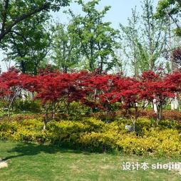 徐州植物园效果图片大全