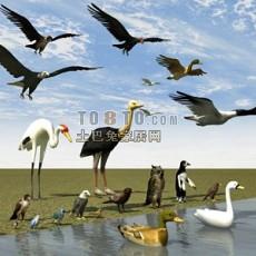 鸟类3d模型下载