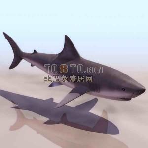 鲨鱼-动物3D模型素材