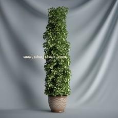 大盆栽3d模型下载