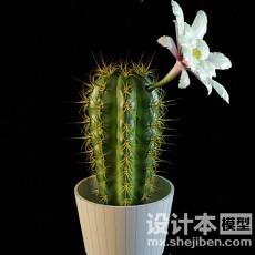 室内盆栽3d模型下载