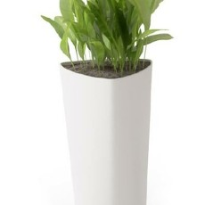 盆栽植物3d模型下载