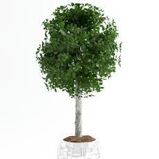 室内绿植 3d模型下载