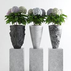 现代花艺盆栽 3d模型下载