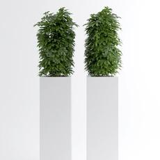 室内盆栽 3d模型下载