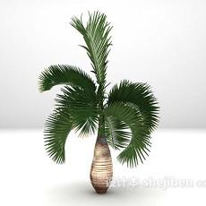 棕榈树3d模型下载