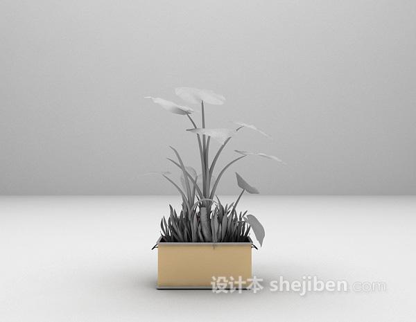 阔叶植物盆景3d模型下载