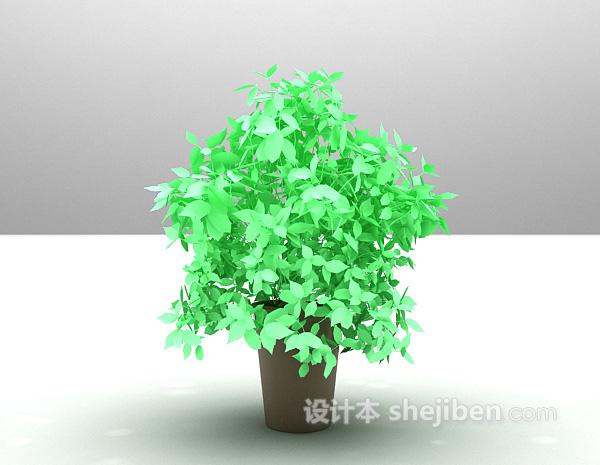 室内小叶绿植3d模型