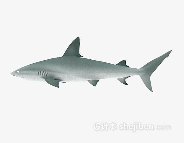 大鲨鱼模型下载