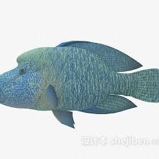 观赏鱼类3d模型下载