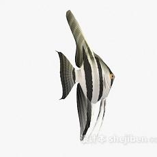 条纹鱼的3d模型下载