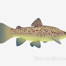 斑点鱼3d模型下载