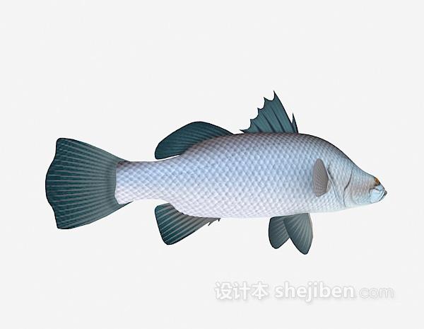 鱼的模型3d下载