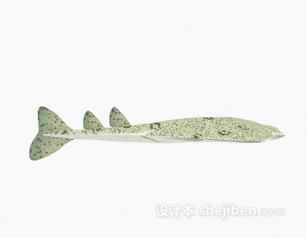 扁头鱼3d模型下载