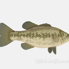 鱼欣赏3d模型下载