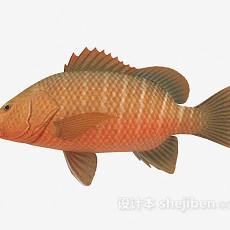 淡水鱼3d模型下载