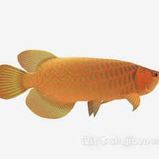 观赏类鱼3d模型下载