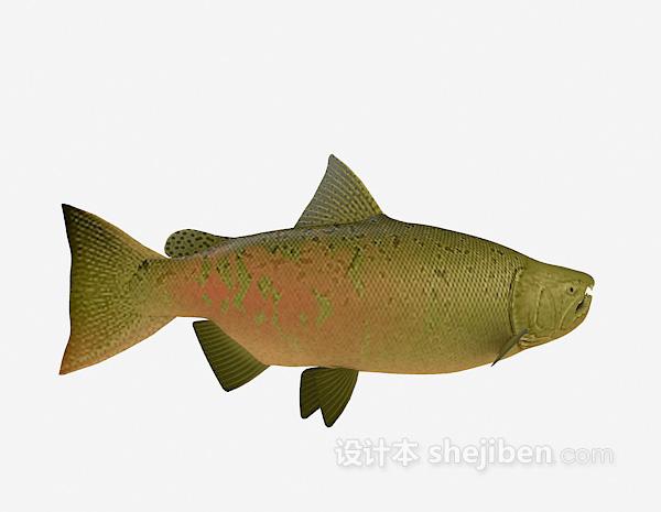 海鱼3d模型大全