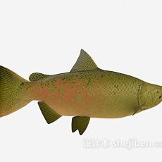 海鱼大全3d模型下载