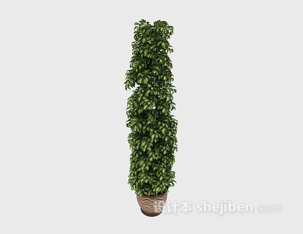室内大型植物3d模型下载