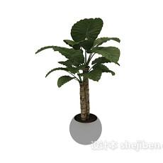 室内盆栽盆景绿色植物3d模型下载