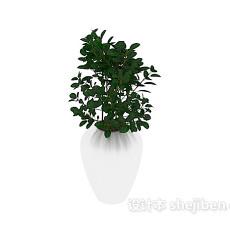 室内装饰绿植 3d模型下载