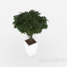 室内装饰盆景 3d模型下载