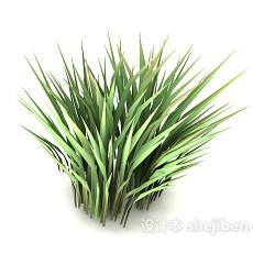 绿色尖叶植物3d模型下载