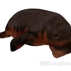 海洋动物3d模型下载