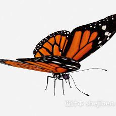 野生花纹蝴蝶3d模型下载