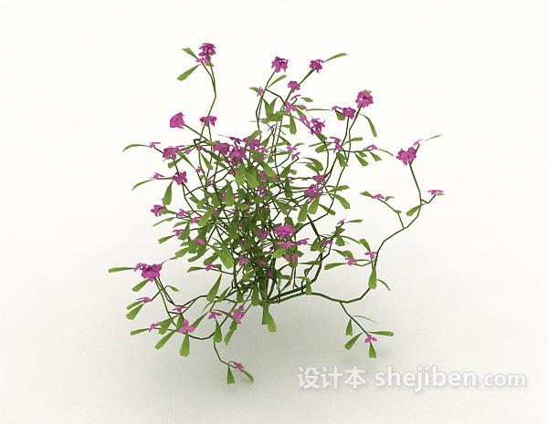 室外藤蔓植物