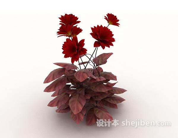 室外红色植物花卉