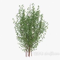 绿叶植物树苗3d模型下载
