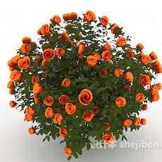 园艺玫瑰花3d模型下载