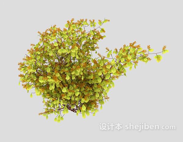 常见野生型植物