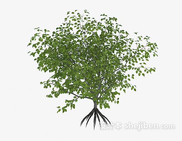 绿色植物树苗