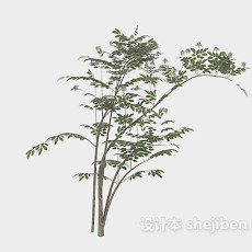 纤细绿树枝3d模型下载