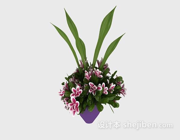 室内装饰植物