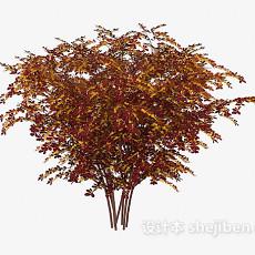户外红叶植物3d模型下载