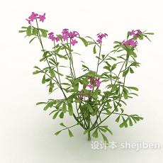野外植物3d模型下载