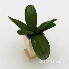办公室盆栽3d模型下载