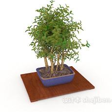 室内盆景植株3d模型下载