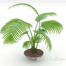 大盆室内盆栽3d模型下载