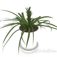 盆景植株3d模型下载