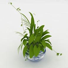 办公室藤蔓盆栽3d模型下载