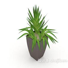 办公室绿化盆栽3d模型下载