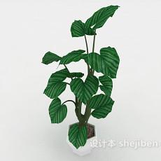 大叶绿色盆景3d模型下载