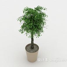 室内休闲植物盆景3d模型下载