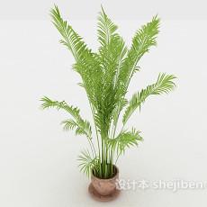 室内嫩绿盆景3d模型下载