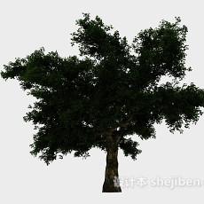 湖边大树3d模型下载